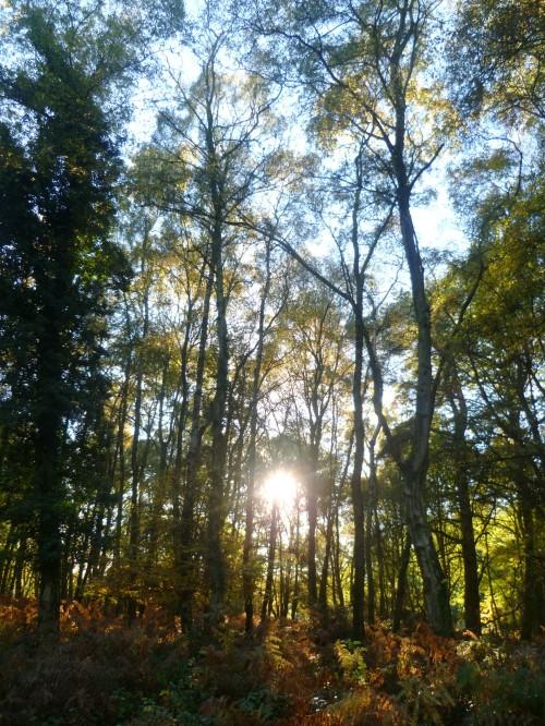 Autumn heals the heart