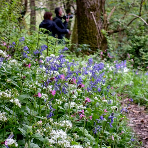 Woodland wild flowers in Cornwall 2014