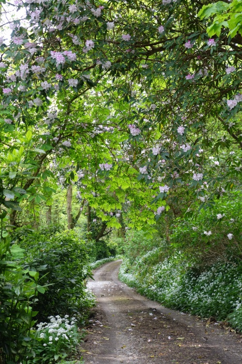 Azalea and wild garlic