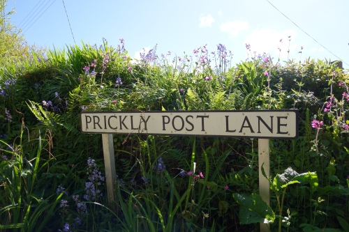 Prickly Post Lane
