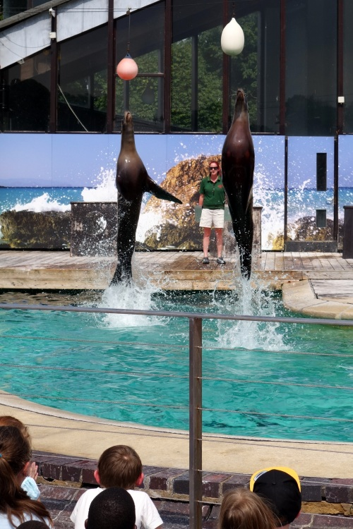 Sea lions at Whipsnade