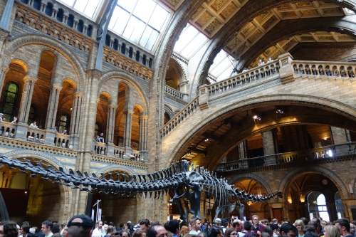 Entrance Hall at Natural History Museum